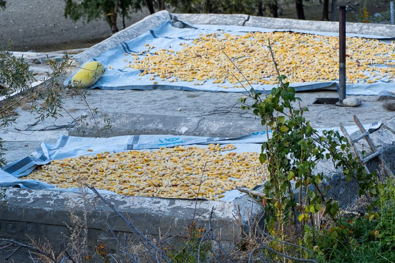 Corn is dried out on the top of a home in Phander Village