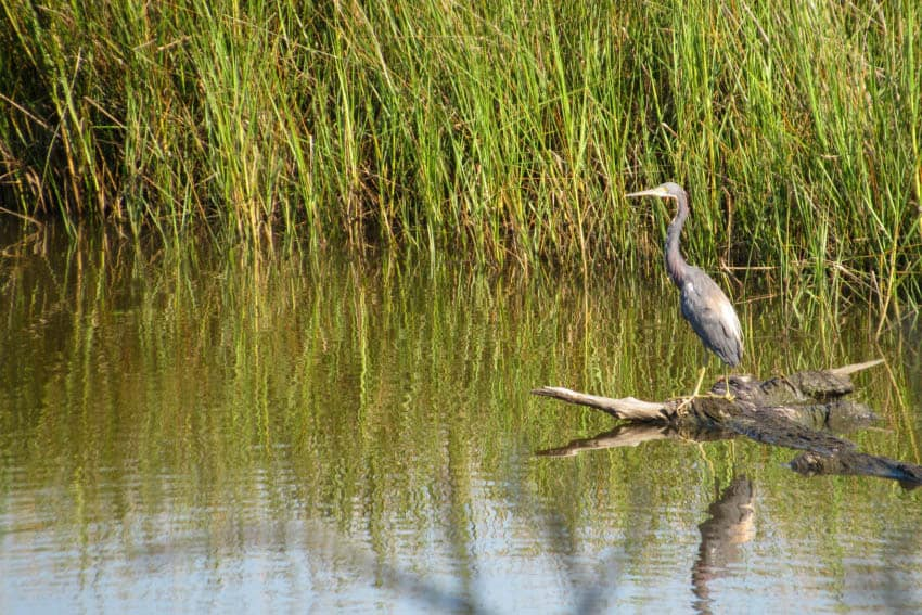 Mississippi's Coast: A Natural Place to Explore 3