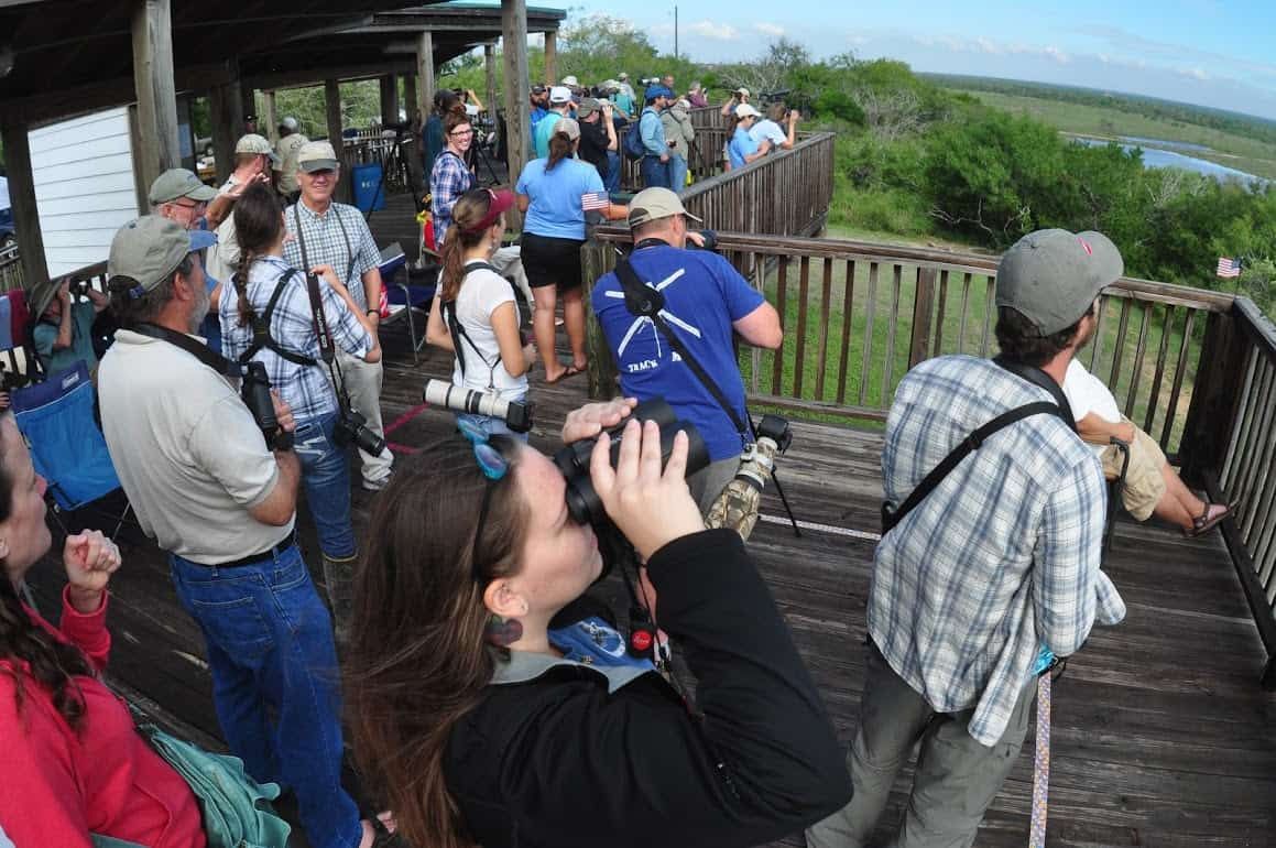Bird lovers gather on the boardwalk for one of the popular hawk watches at Hazel Bazemore County Park, one of many places to birdwatch around Corpus Christi.