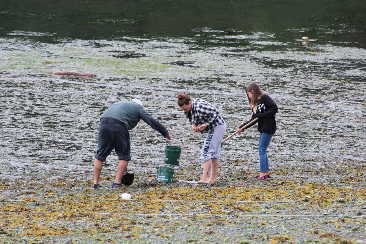 A family digs clams on MacDonald Spit. Between Beaches