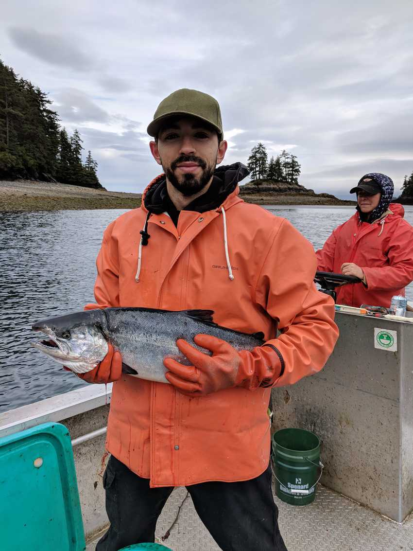 Temporary worker with a silver salmon Between Beaches