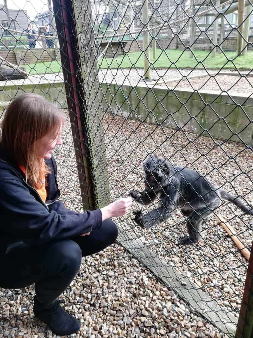 You might be allowed to feed a monkey at Monkey Haven if it's your birthday