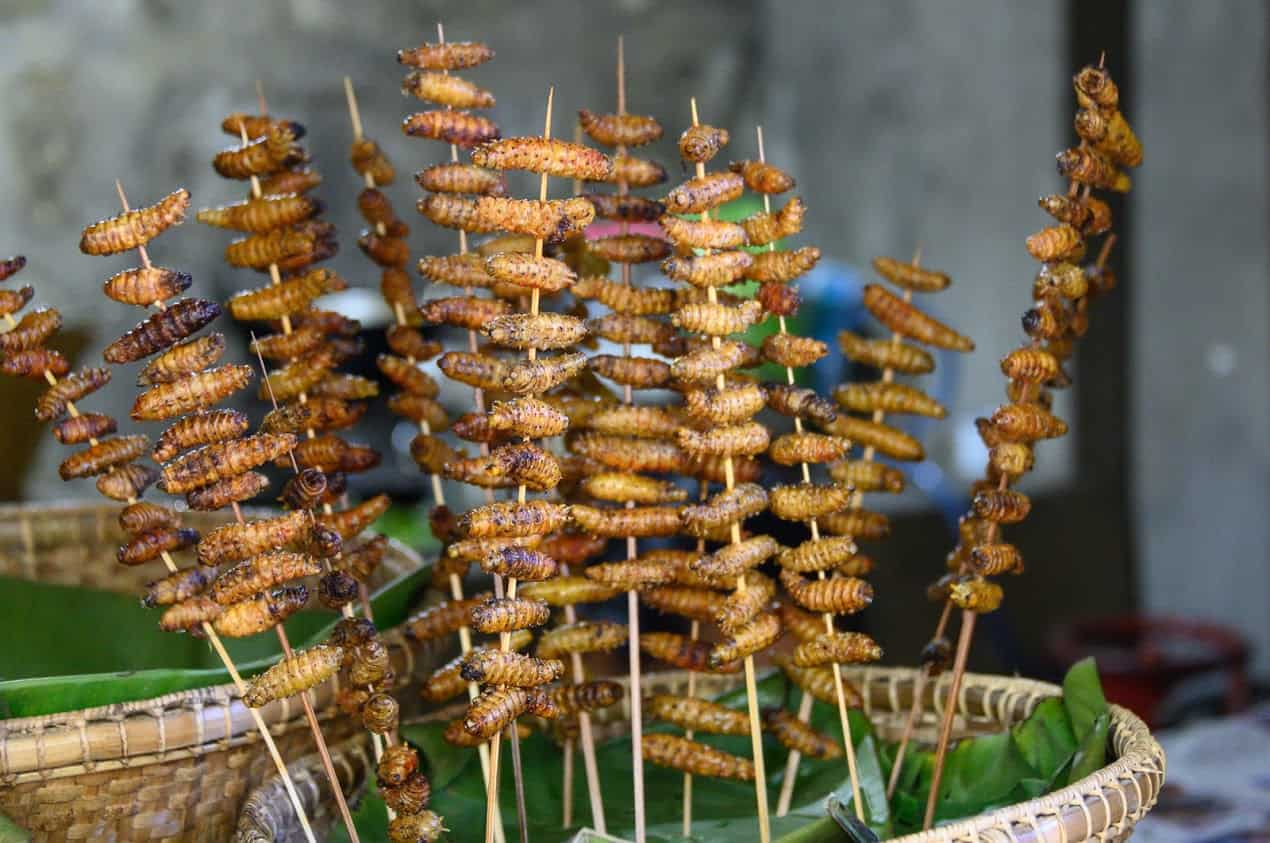 Roasted and crunchy Silkworm larvae are one of the many local delicacies for purchase at the Hornbill Festival.
