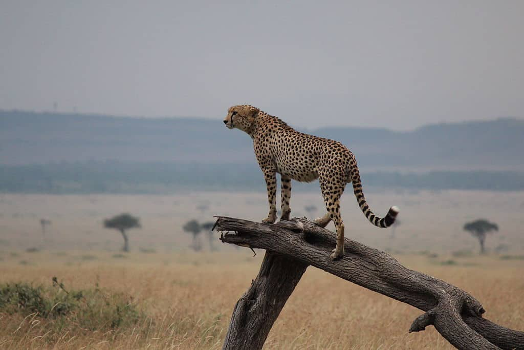 Ketki would like to photograph wildlife in Maasai Mara once travel restrictions are lifted,