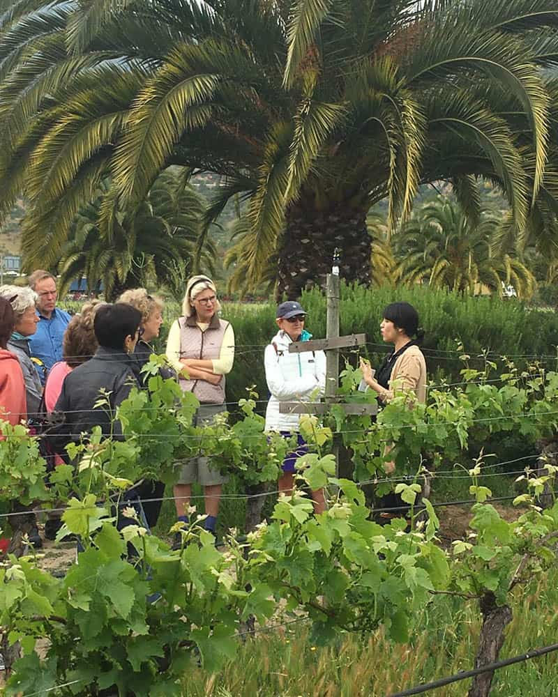 women, WTG group at Chile vineyards