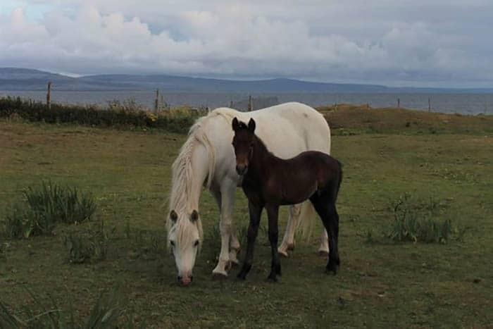 Connemara, Ireland's West Coast 1