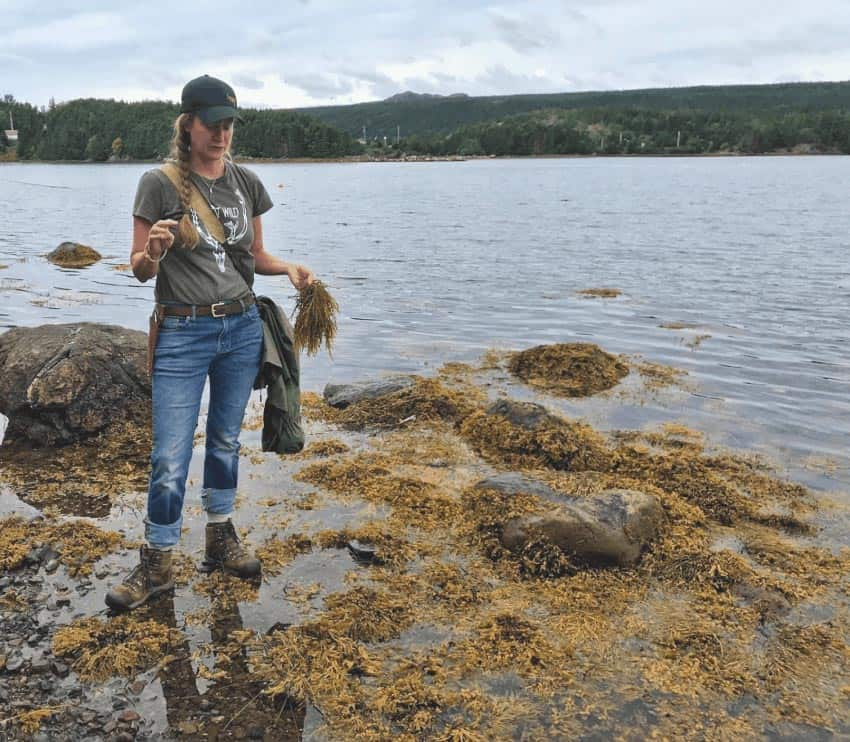 Lori McCarthy looking for edible plants on the shore in Avondale, NL. Mary Gilman photos.