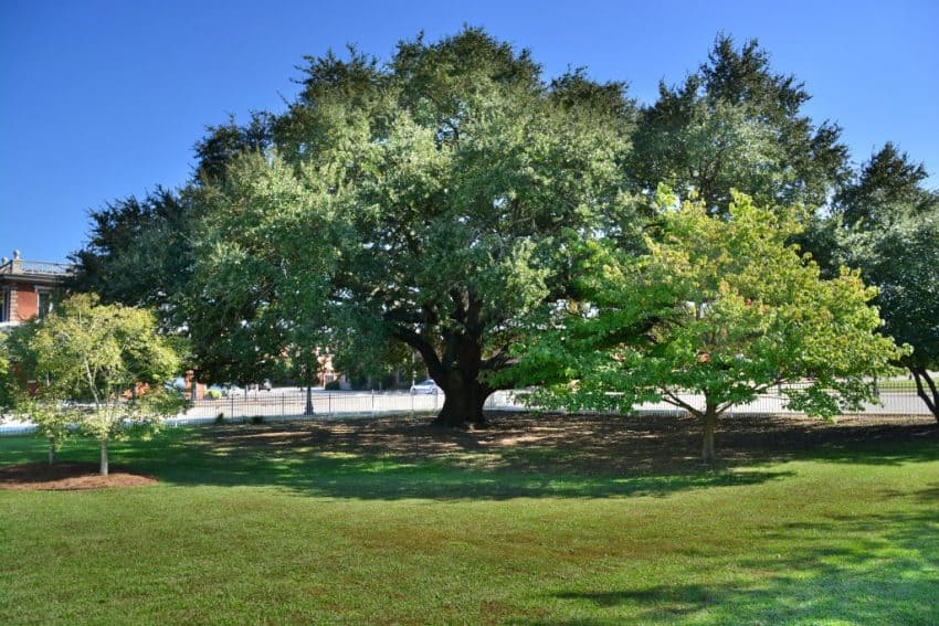 The museum has the Liberty Tree right on the property.