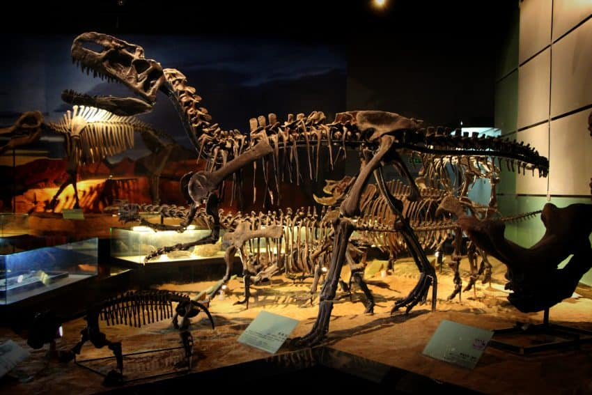 Fossils of a dinosaur found in Turpan surroundings at Turpan Museum.