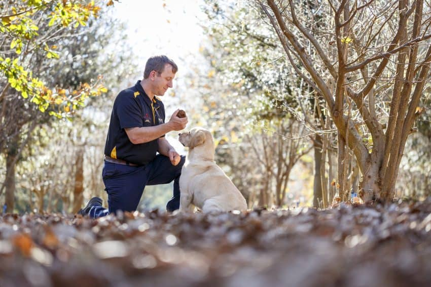 Truffle Treasure Hunting in Australia