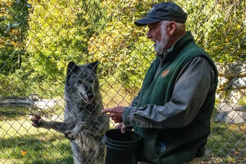 Darling introduces WCC's Ambassador Wolf, Zephyr, with meaty treats.