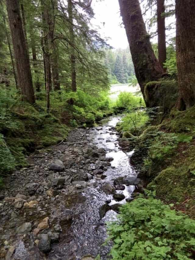 The Tongass is a temperate rainforest, with abundant island streams flowing to the bay.