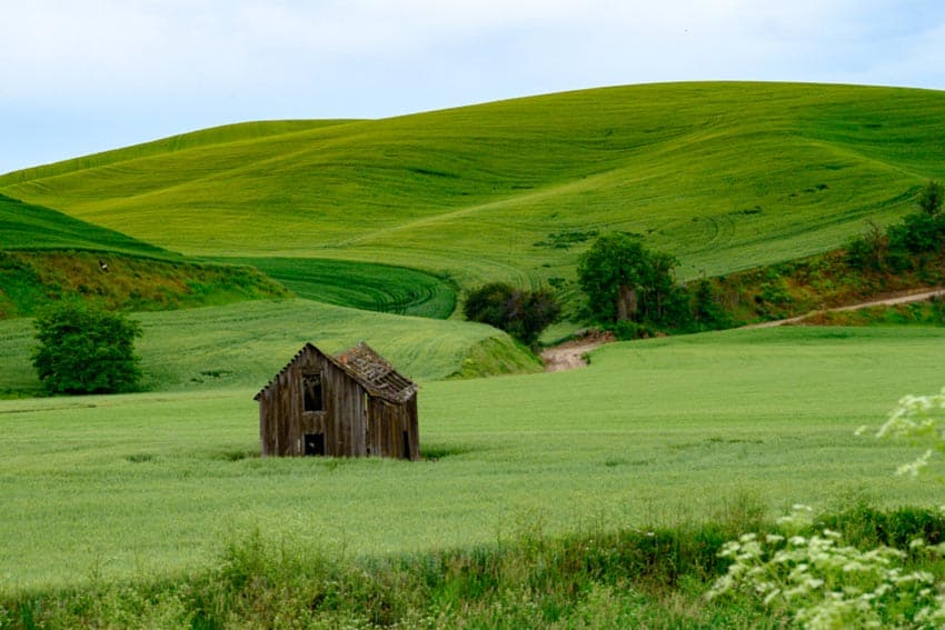 This old barn provides a rich color contrast in a sea of green fields.