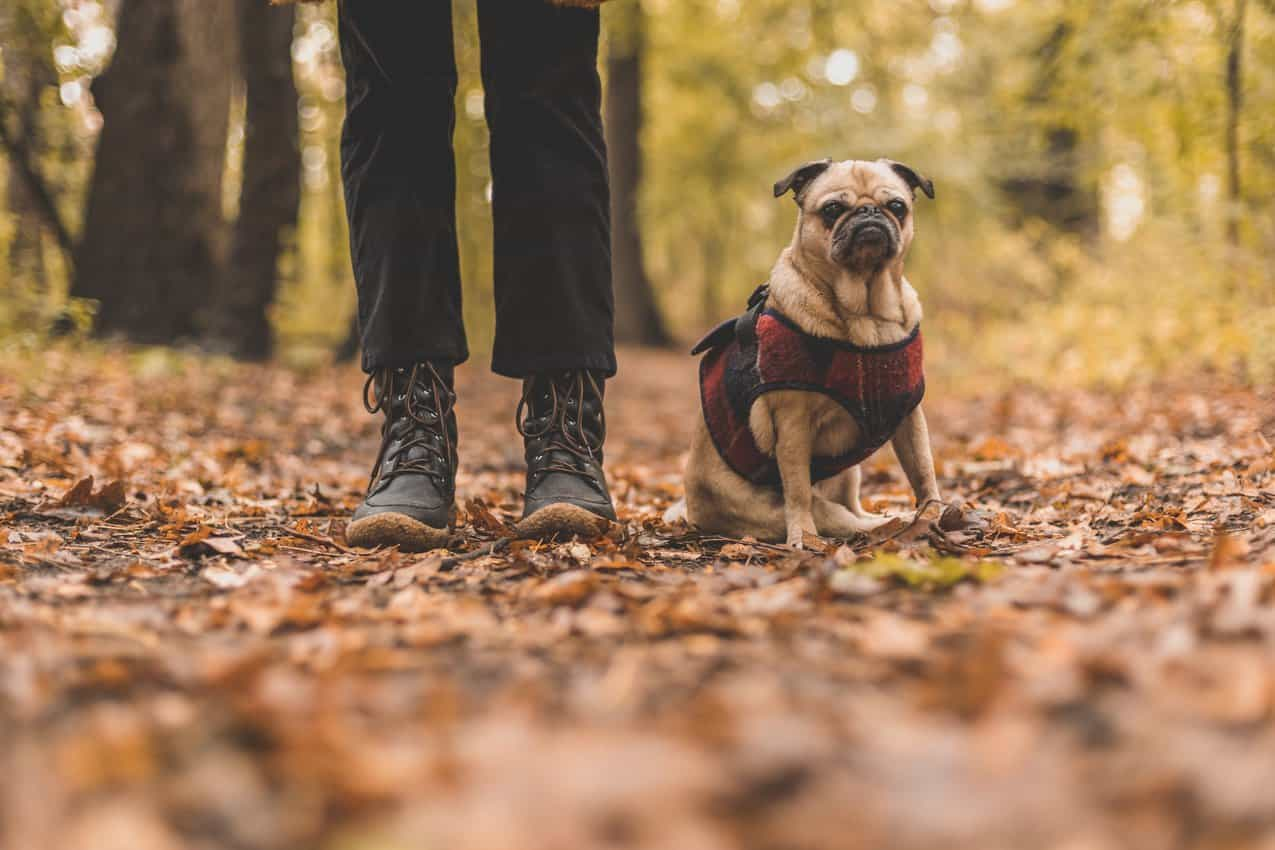 pet and owner on fall walk