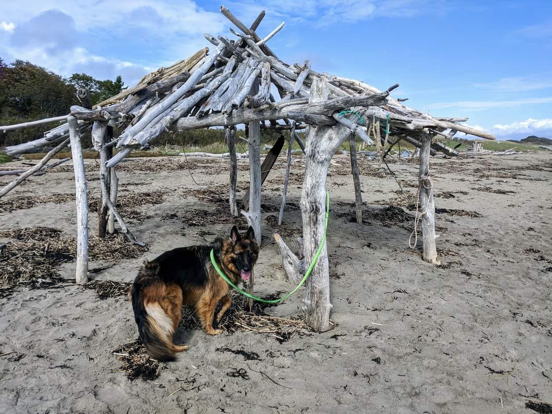 Reid Beach, dog friendly in Maine