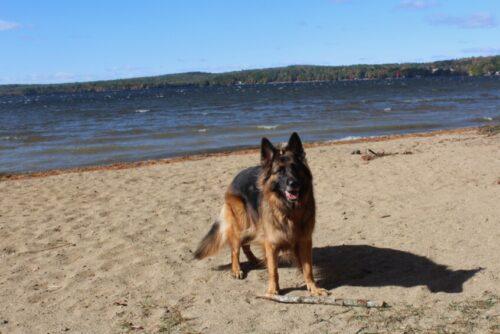 Lake Damariscotta, dog friendly