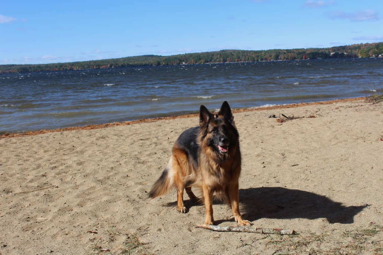 Visiting Dog-Friendly Mid-Coast Maine