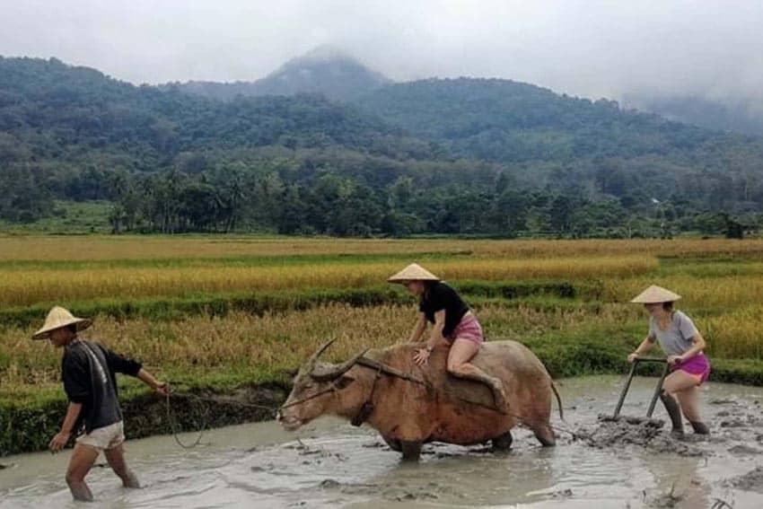 Rice Farming 101: Learning in Laos