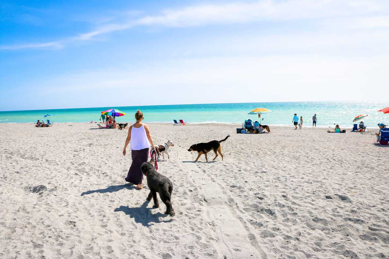 Dogs and people gather on the beach at Brohard Paw Park in Venice. Photo from VisitSarasota.com