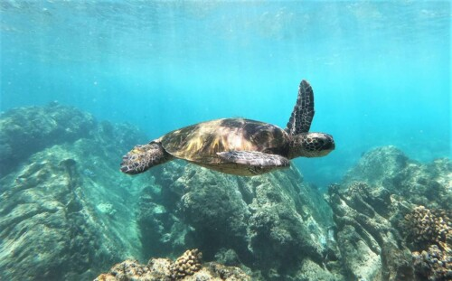 Clear Calm Waters and Sea Turtles Prior to the Rogue Wave