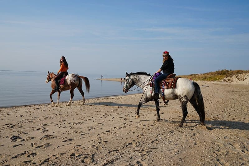 Horsing Around on the Beaches of Delaware Bay