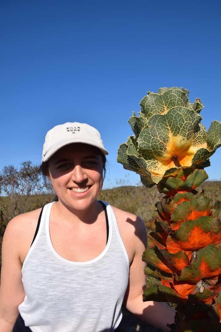 Wildflower Show in Western Australia