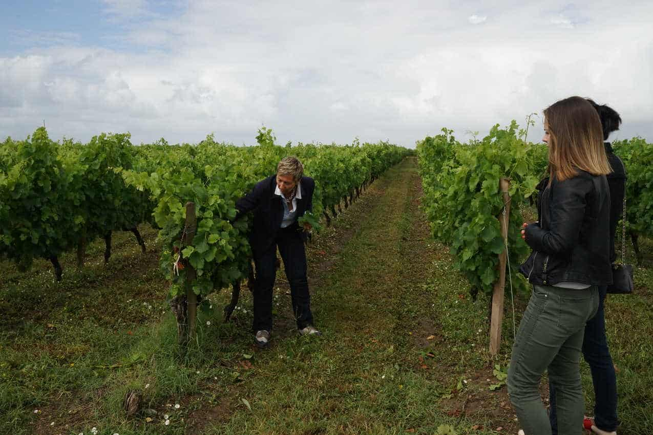 Inspecting vines at Chateau Tour Castillon in Medoc.