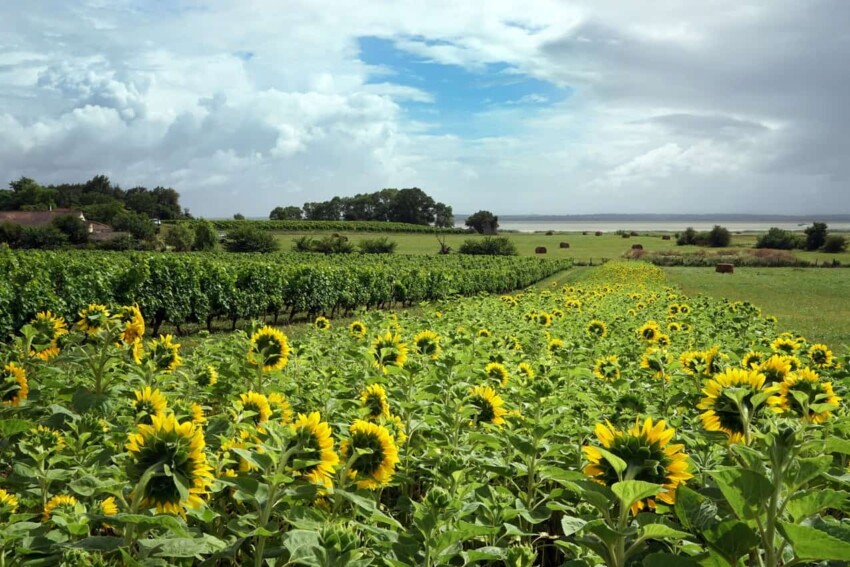 Médoc, Gironde Southern France: Drink it All In