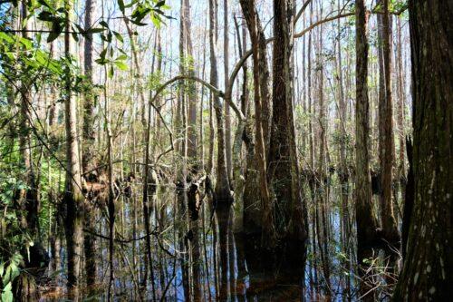 Seven Creeks Recreation Area offers endless outdoor exploration. Nancy Moreland photo.