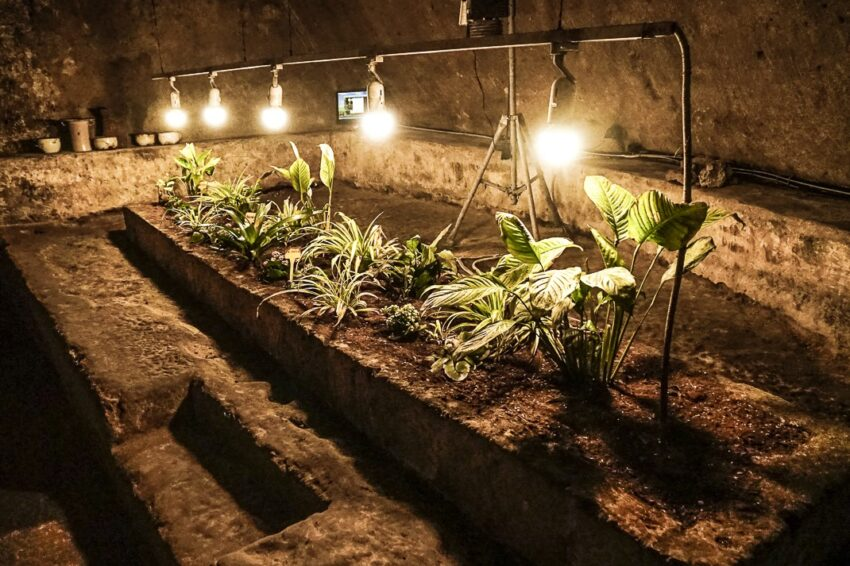 The museum learned it can grow tomatoes and strawberries underground in an experiment to see if they can grow produce in harsh, foreign environments.