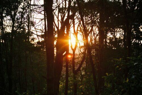 Ecology Trail