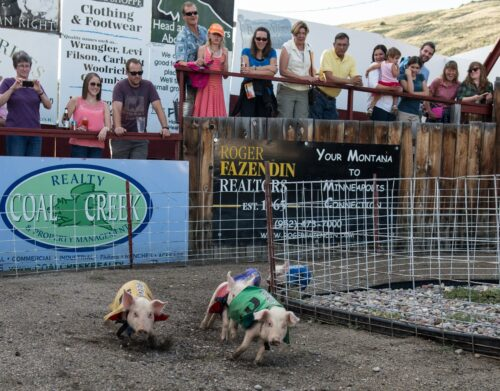 The Bear Creek Saloon has been hosting pig races for over 25 years for the purpose of raising scholarship monies for local kids.