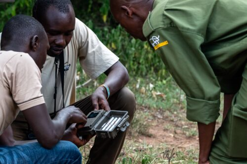 A ranger helps volunteers set up a camera trap at Enonkishu conservancy Rose Palmer
