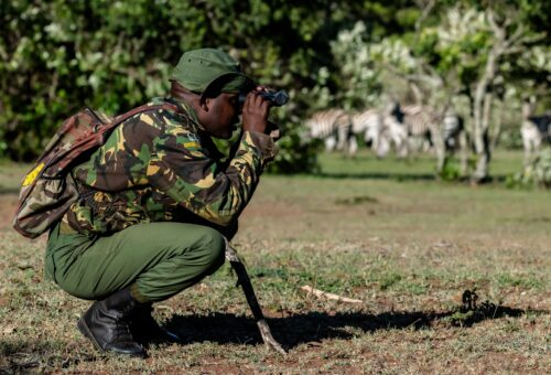An Enonkishu Conservancy ranger spotting wildlife on a walking data gathering trek Rose Palmer