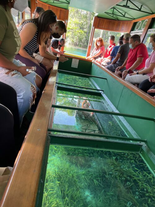 Viewing the bottom of the spring in the glass-bottomed boats at Silver Springs in Ocala, Florida.