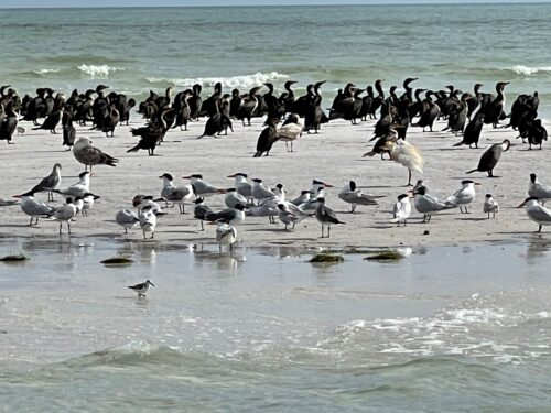 The 403-acre Anclote Key park is home to more than 43 species of beloved birds, including the American oystercatcher, bald eagle and piping plover.