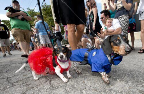 dachshunds in Key West