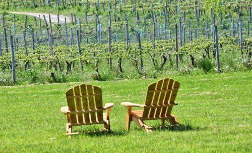 Finger Lake vineyards