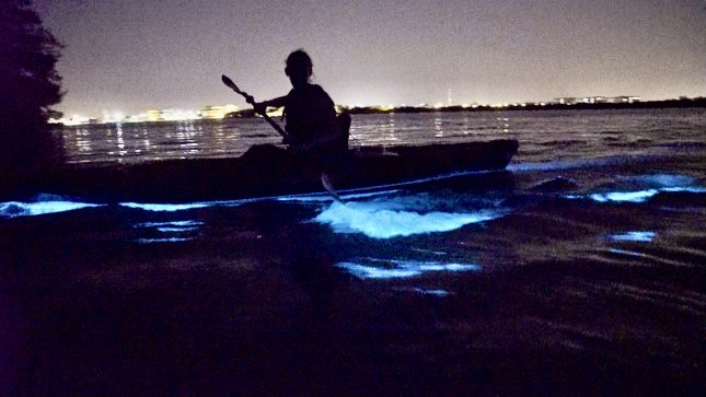 Preparing for the night time light show in the Indian River Lagoon©A Day Away Kayaking tours