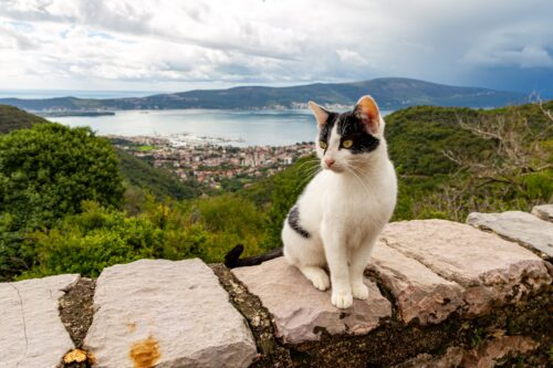 Gornja Lastva offers beautiful overlooks on the Bay of Tivat, and a comfortable home to several cats.