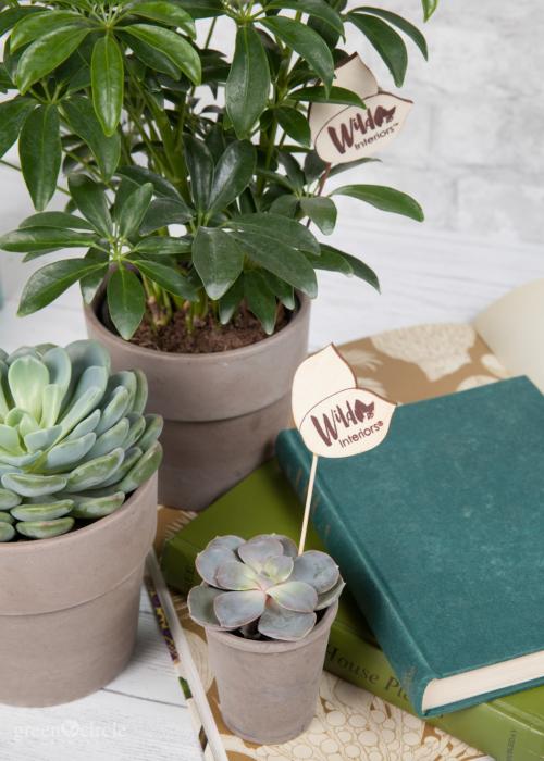 wild interiors plants