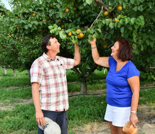 Palisade Fruit Shack Picking