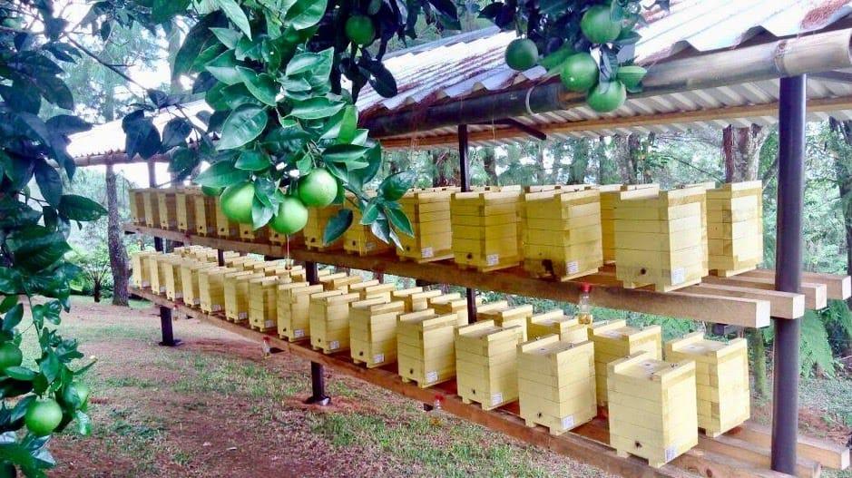 Melipona apiary at a citrus farm - credit: Mayan Bee Sanctuary