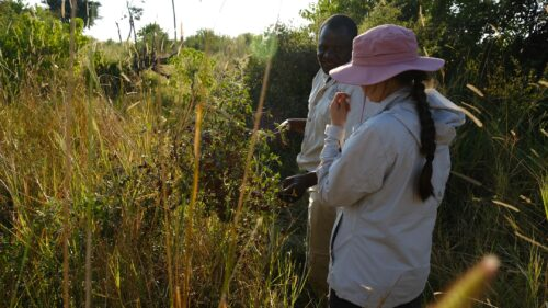 Searching for insects