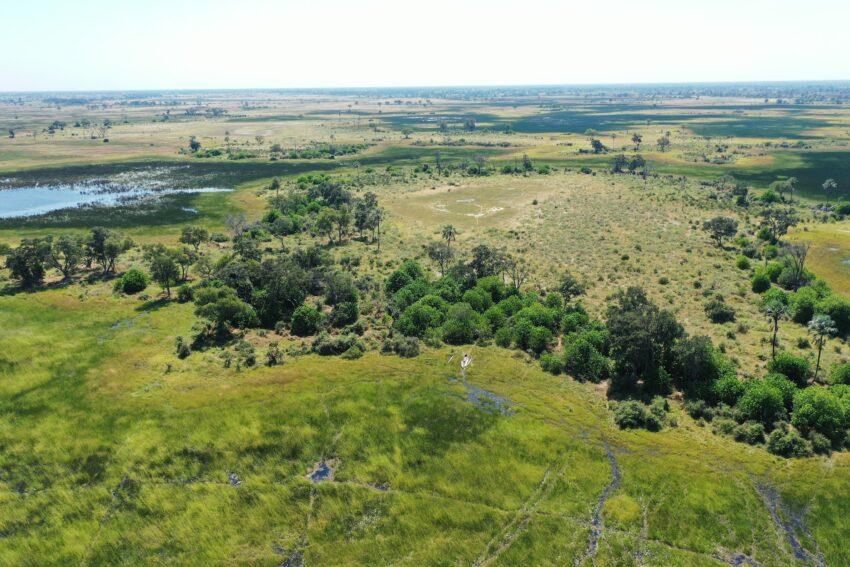 Wild lands in the Okavango Delta.