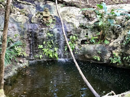 Small open cenote, the bees year-round water source.