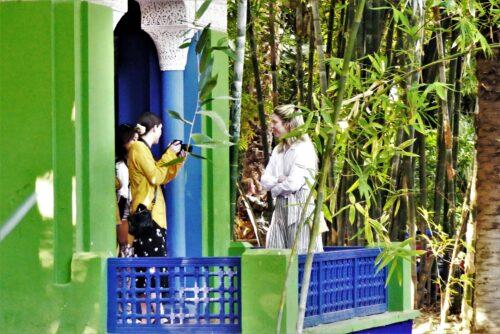 bamboo at the garden