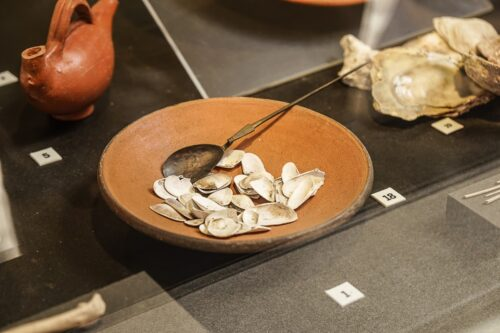 Fossilized shells of seeds sold as concession stand food.