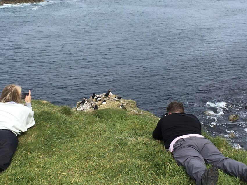 taking pic of people taking pics of puffins