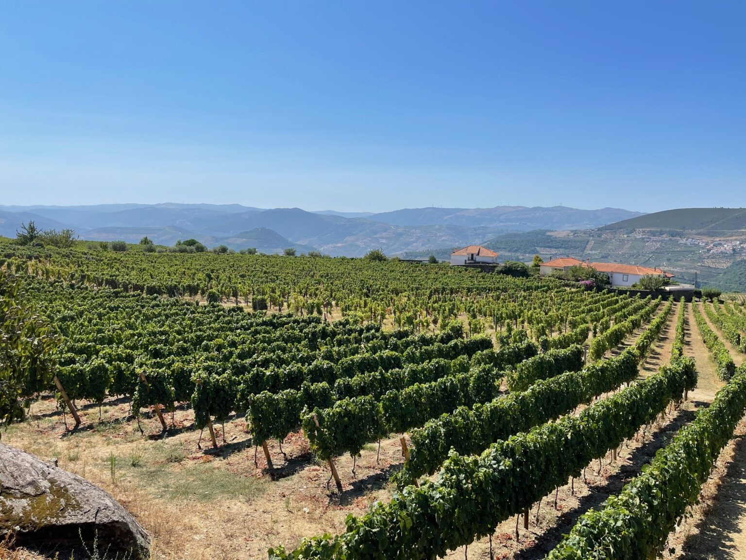 Vineyards are everywhere along the Douro River.